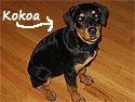 My dog - Kokoa
